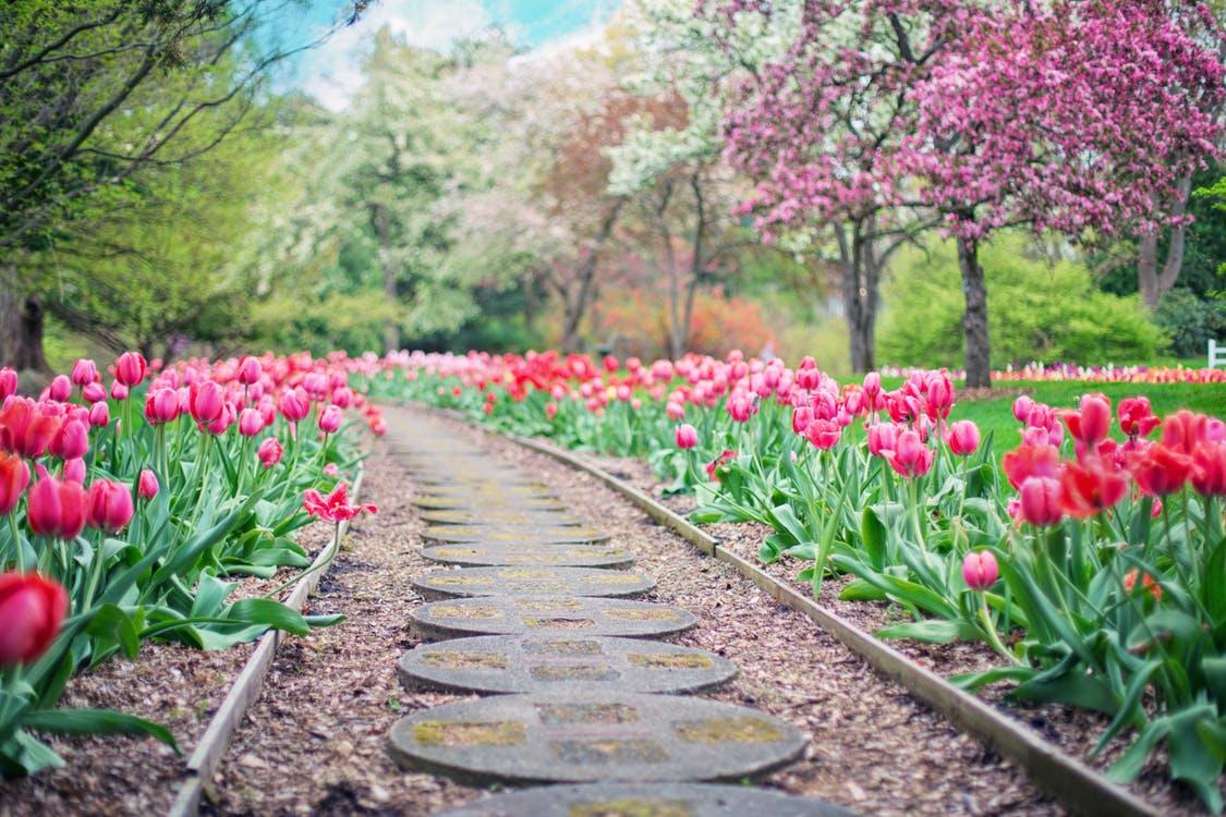 The Origins of Garden Path Sentences